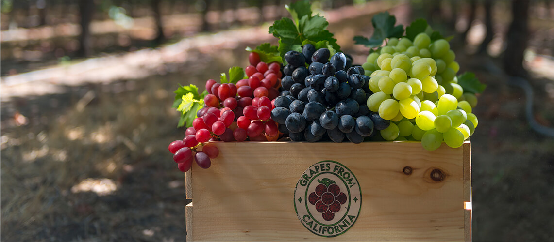Annual grapevine cycle grapes from california for Table grapes