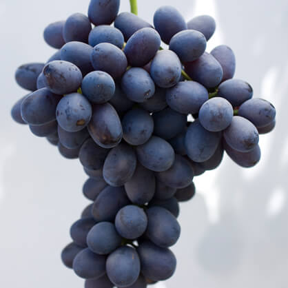Purple Bloom Grapes