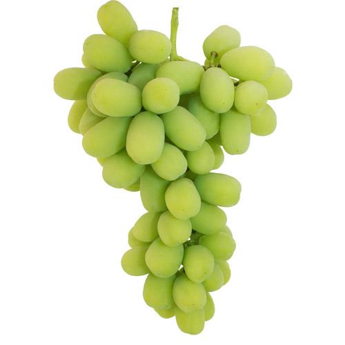 Autumn King Grape